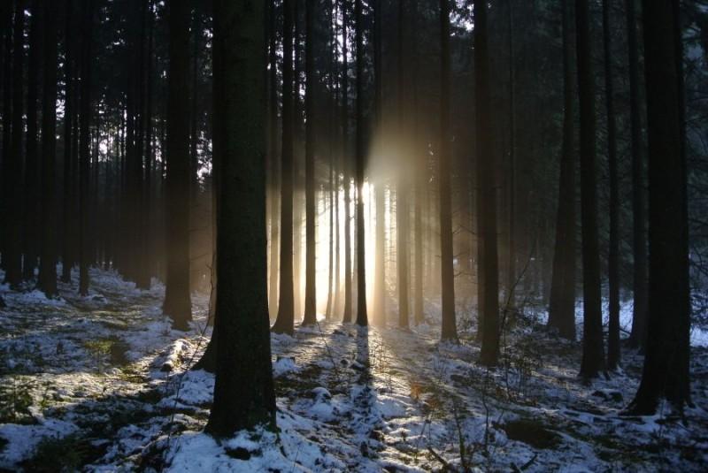 Neujahrsspaziergang im Oberbergischen land.